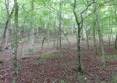 Deep Woodland